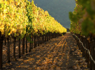 Chanel compra casa vinicola St Supery  in Napa Valley USA