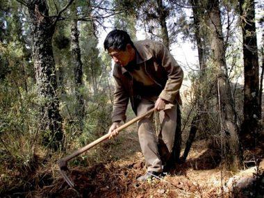 Yunnan raccolta tartufo