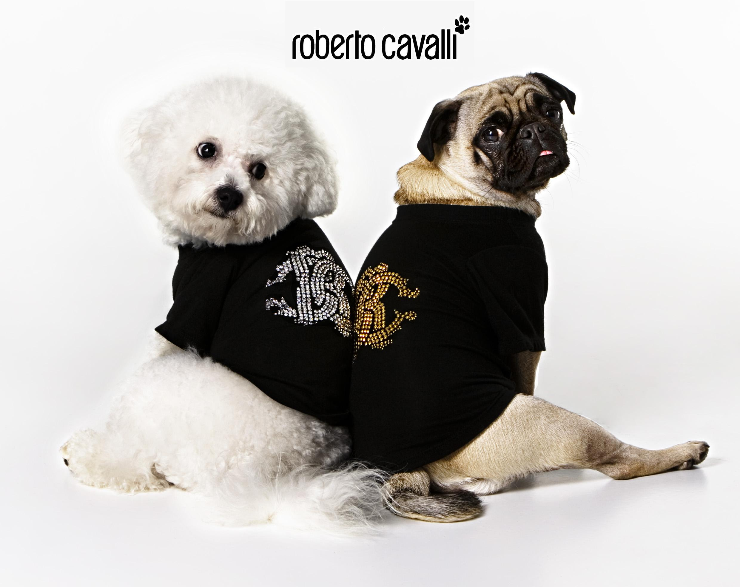 Pet fashion business per Cavalli con